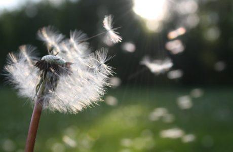 pollen-hooikoorts