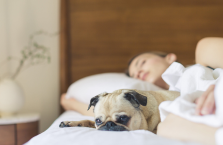 vrouw-hond-bed-slaap