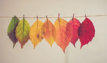 NiceDay blog: Levensfase