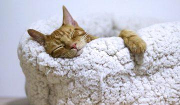 Zo verbeter je je slaap