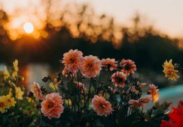 praktische tips bij stress in coronatijd